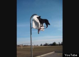 WATCH: This Rescue Dog Should Probably Call Herself Spiderdog