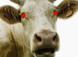 Cows Are The Root Of All Evil, And We're Too Hungry To Care