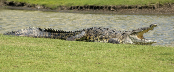CROCODILE MEXICO GOLF COURSE