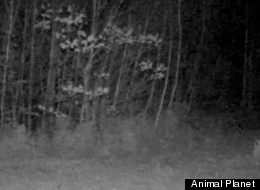 WATCH: New Tool Allows You to Hunt For Bigfoot