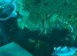 Sinkhole Opens Near Dunedin, Florida Home