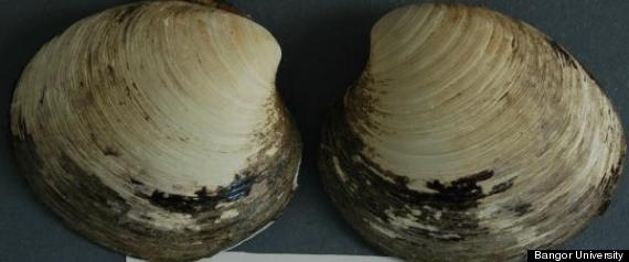 oldest living animal