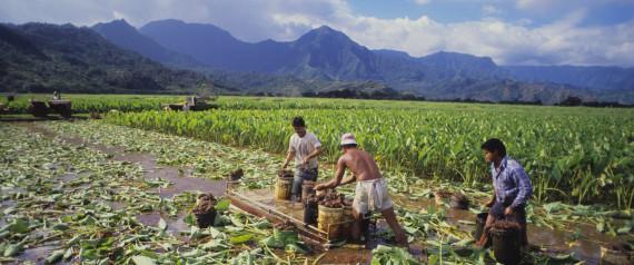 HAWAII FARM