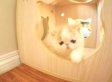 Adorable Kitten Named Bun Bun Barks Like A Puppy (VIDEO)