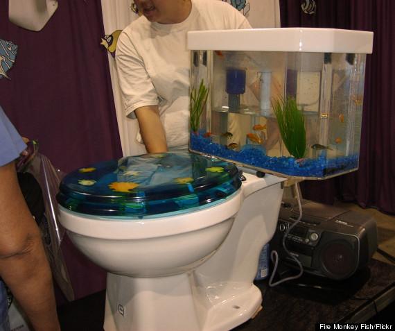 toilet fish tank