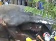 'Sea Monster' Carcass Washes Ashore In Southeast Asia, Is Hoisted Onto Truck (VIDEO)