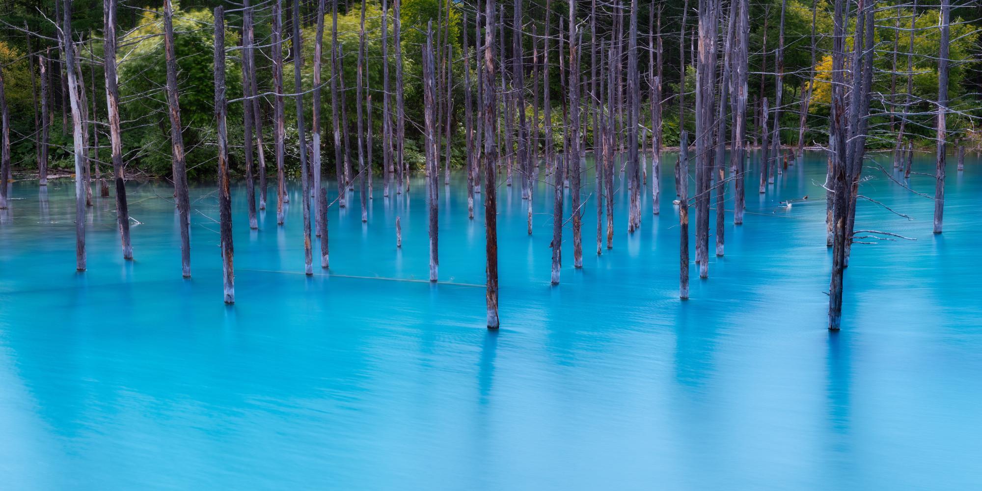 A Pond So Beautiful It Belongs On Your Desktop Screensaver
