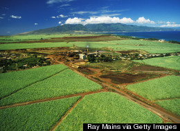 As Kauai and Big Island Sign GMO Bills, Maui Gears Up For The Fight