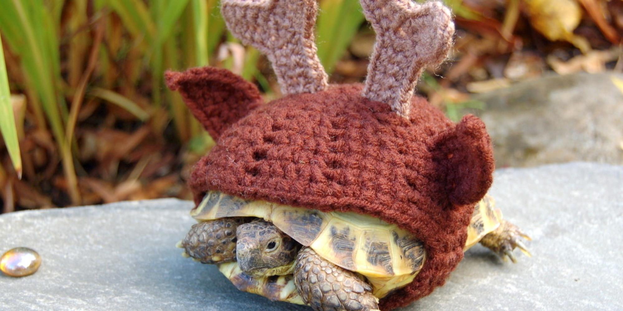 Knitting Pattern For Tortoise Coat : PHOTOS. Accessoires pour animaux: apres les chiens, au ...