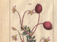 A Brief Medical History Of The Cranberry