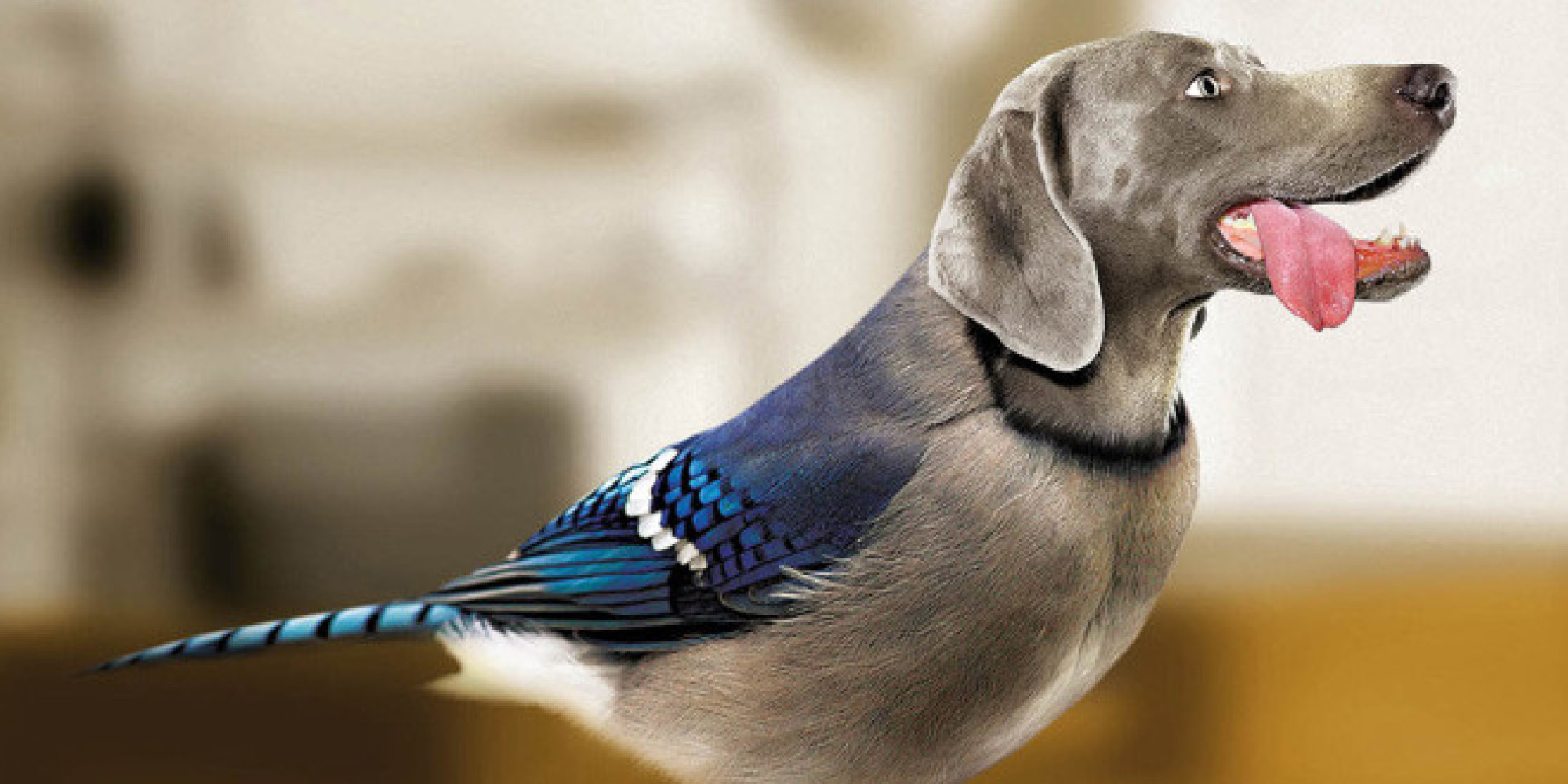 birds with dog heads and dogs with bird bodies are dirds