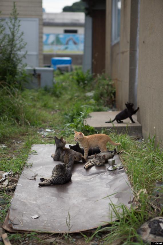 La Isla de los Gatos :3