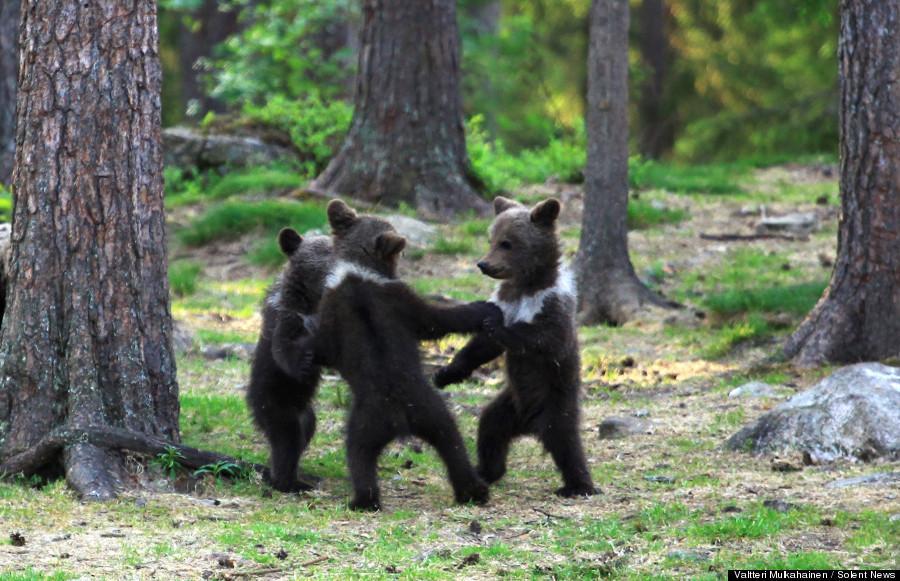 三匹のかわいいクマ