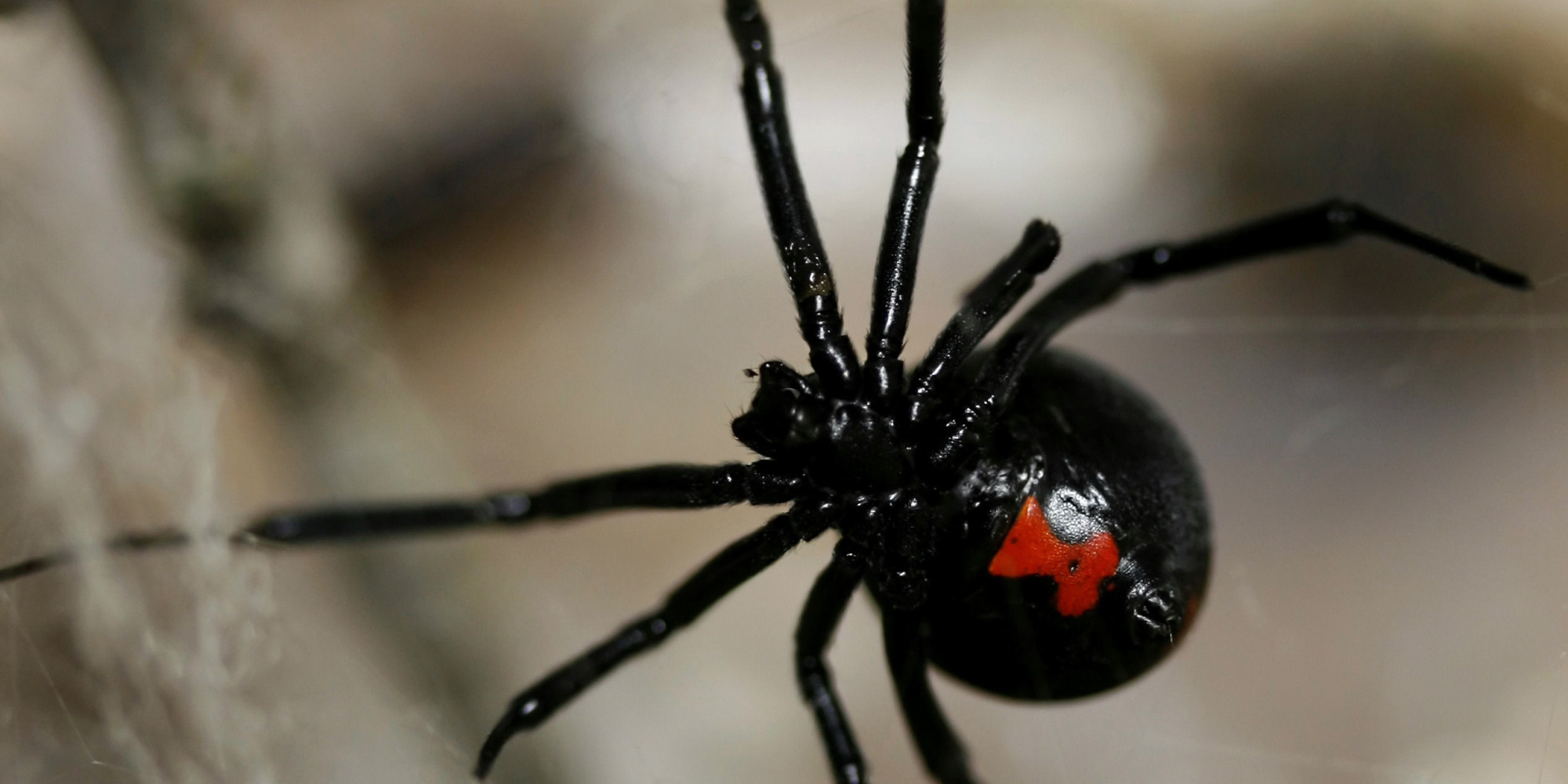 Black Widows Found On Grapes At Supermarkets In Several States