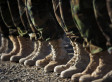 Military Training Altered Due To Budget Cuts