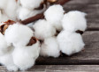 Cotton Ball Diet - Whether It Is Or Isn't A Trend, It's Still Something Heinous That Young Girls Are Doing To Lose Weight