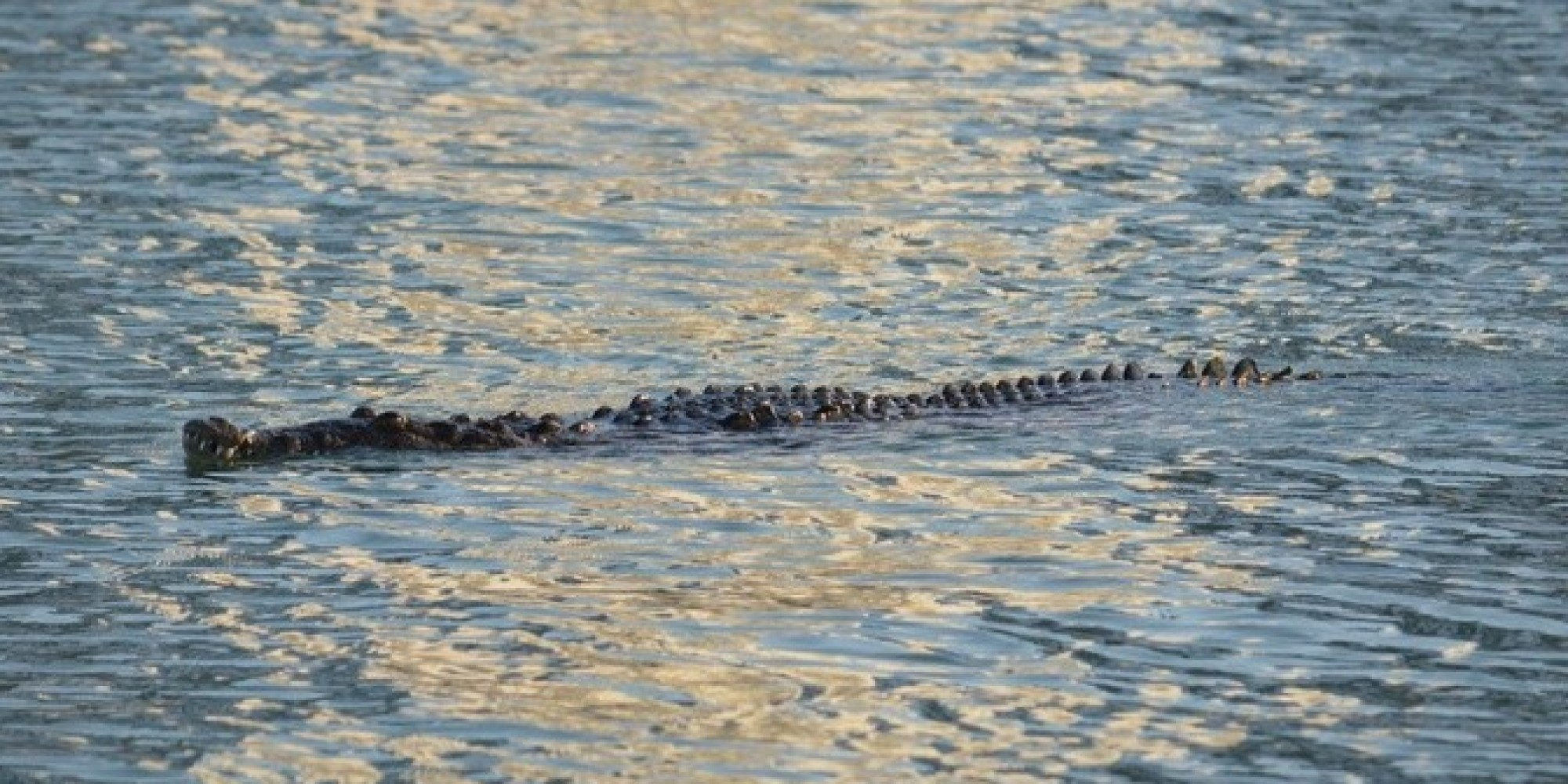 a crocodile was spotted in miami beach and here are the photos