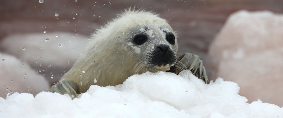 EU seal products ban