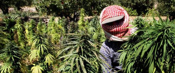 LEBANON WEED