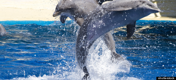 Decoding Dolphin Talk: Are We Smart Enough?