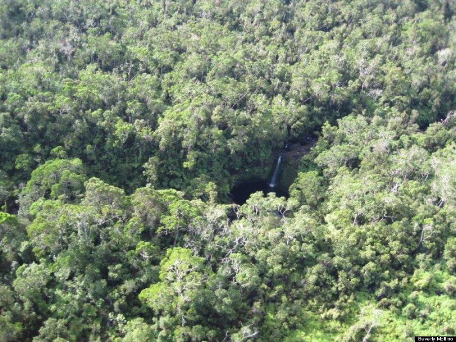 Rainforest On The Big Island: Ancient Koa Forest For Sale On Hawaii's Big Island