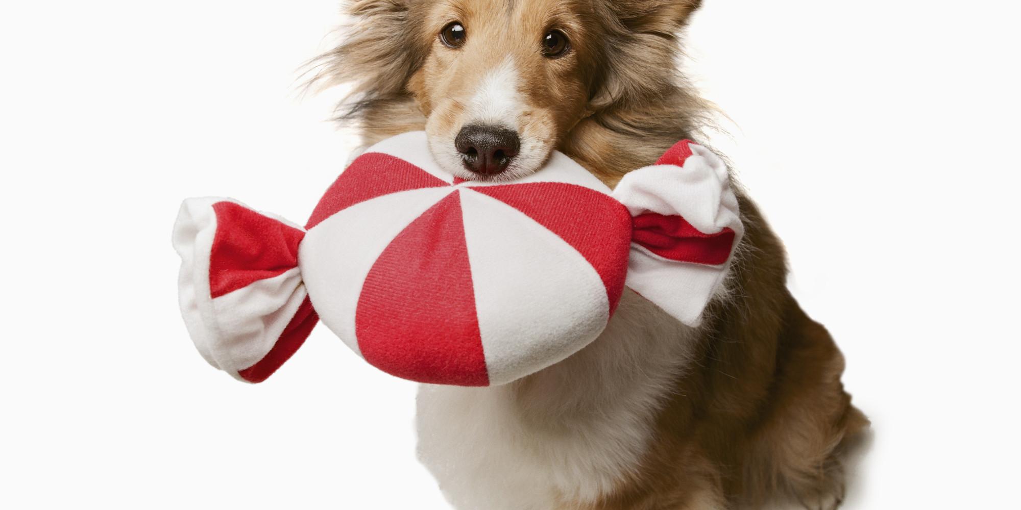 Christmas Snacks And Food That Can Harm Your Dog   HuffPost UK