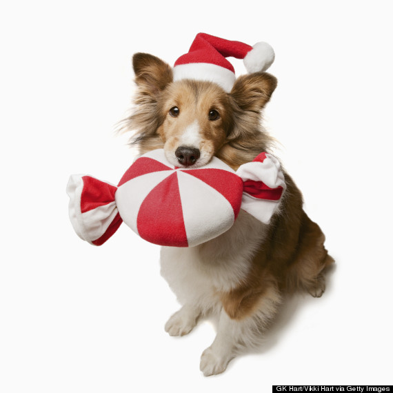Christmas Snacks And Food That Can Harm Your Dog