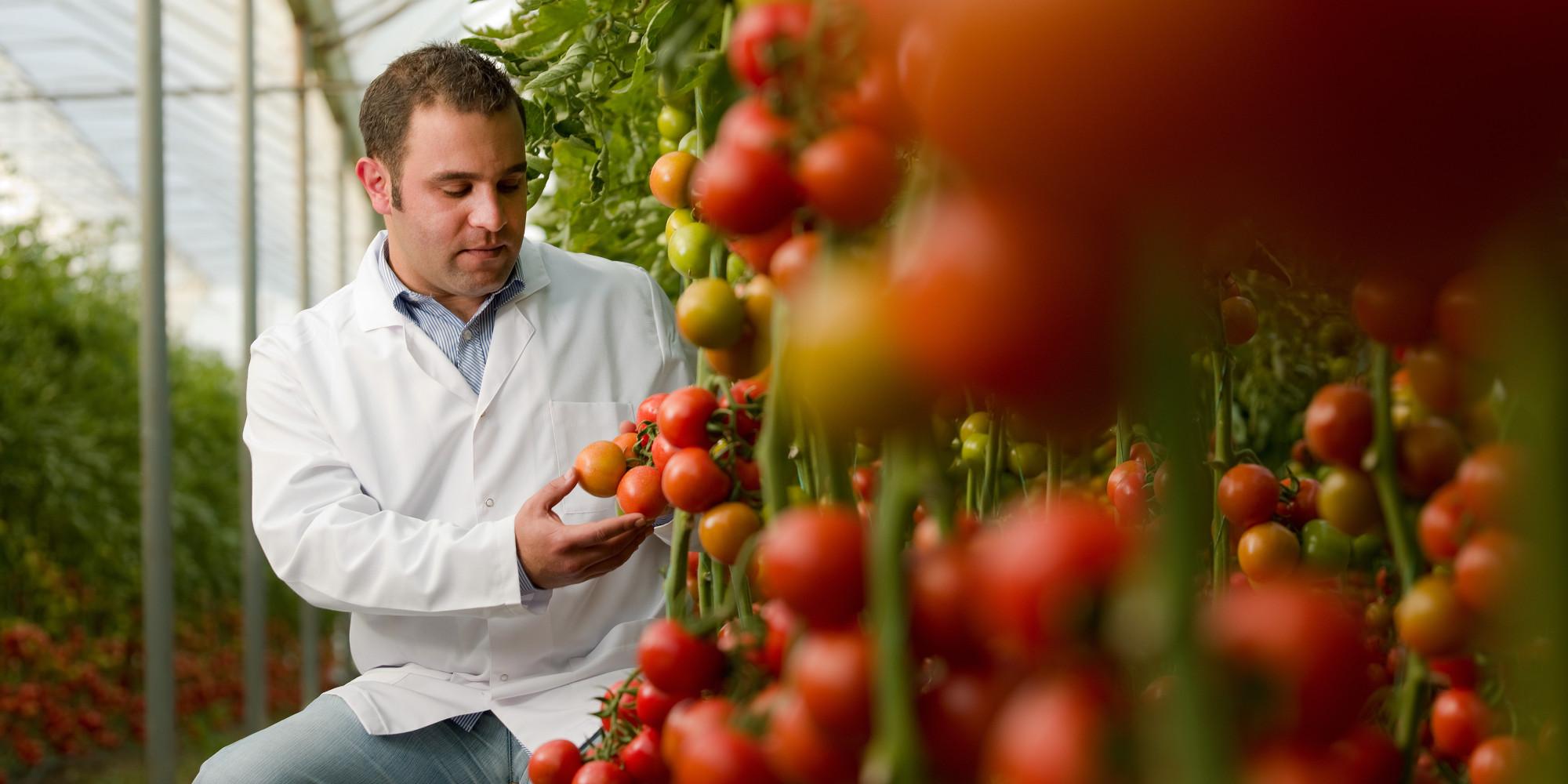 good thesis organic food