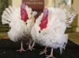 Obama Pardons National Thanksgiving Turkey (VIDEO)