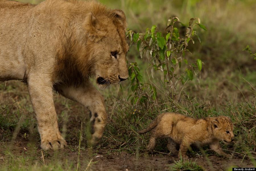 lion19