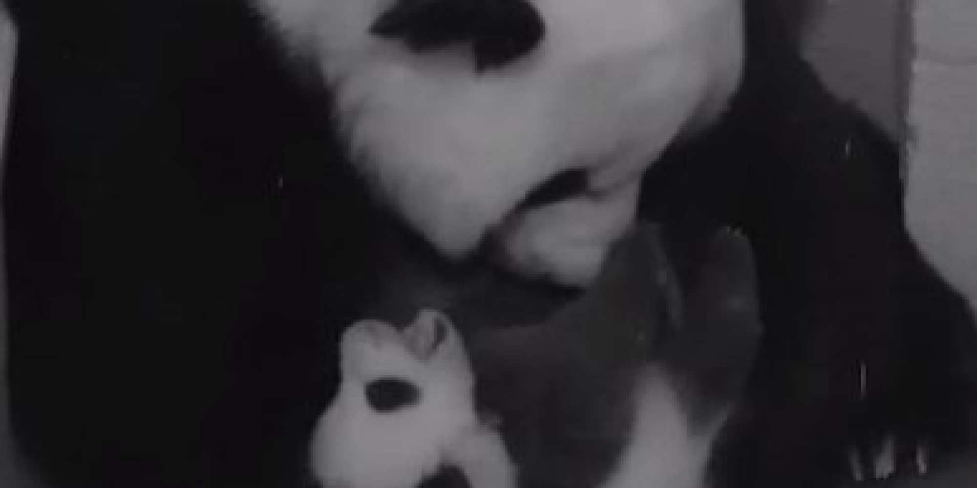 Time-Lapse Video Of A Baby Panda Growing Up Is About To Redefine Cuteness
