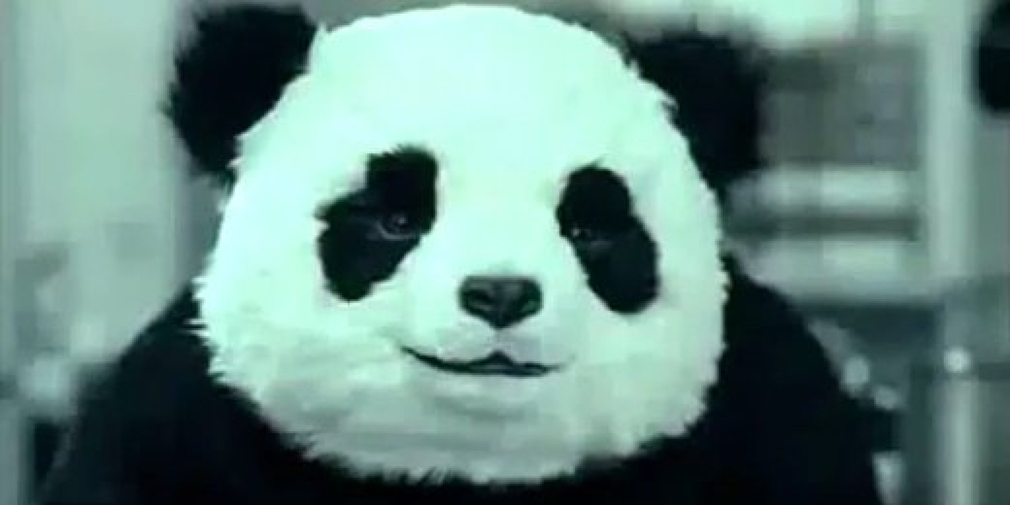 Panda Cheese Commercials Are Still Hilarious (VIDEO) | HuffPost