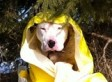 Brr! Dog Falls Into Ice-Covered Pond, Rescue Workers Save His Life (PHOTO)