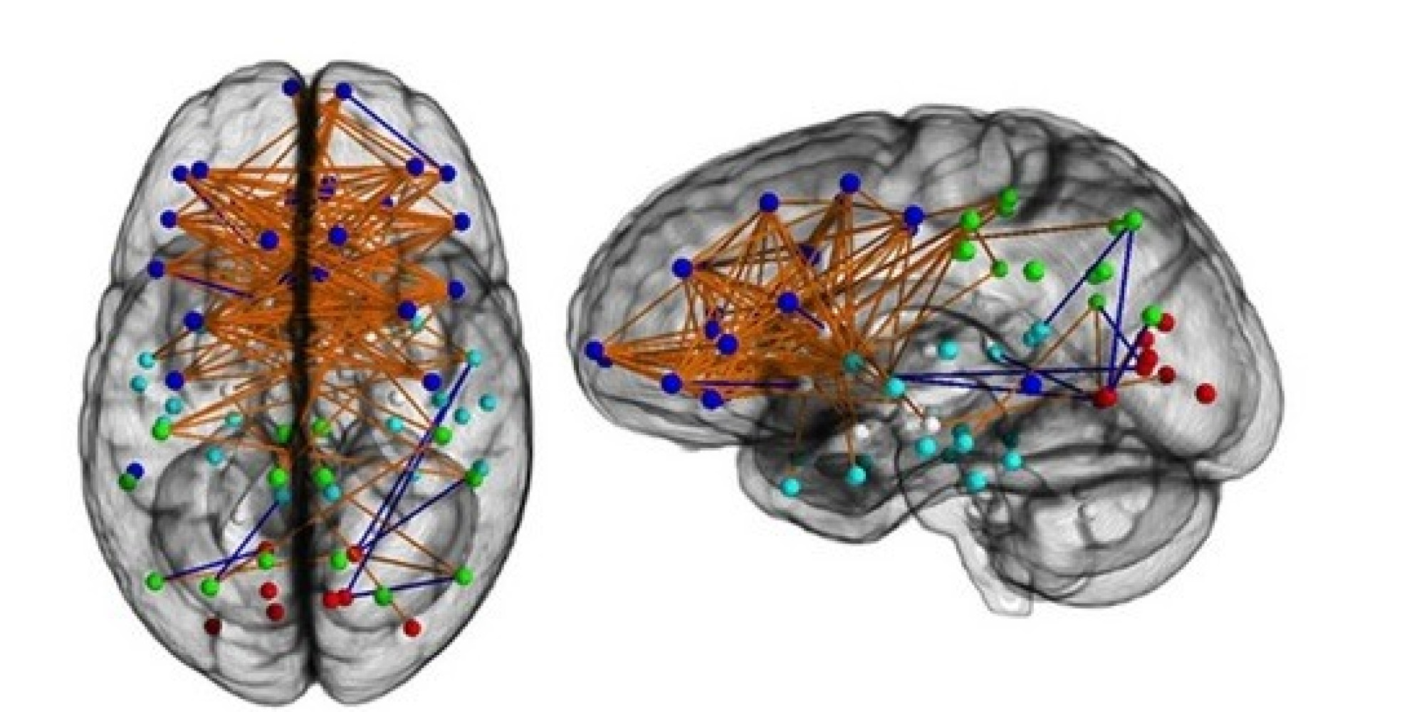 male and female brains It's becoming clearer and clearer that there are many robust differences between  male and female brains — and also lots of overlap.