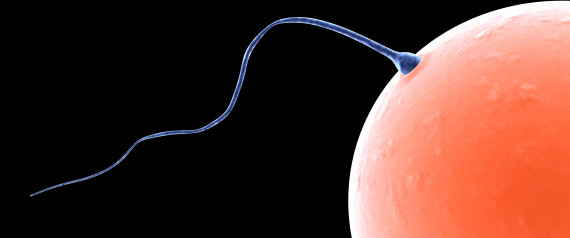 birth sperm slowing down Male control