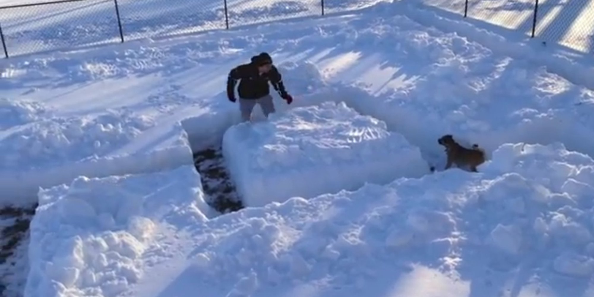 Dog Cheats His Way Out Of Snow Maze (VIDEO) | HuffPost UK