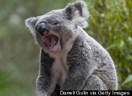 What Does the ___ Say? 11 Unexpected and Unusual Animal Sounds
