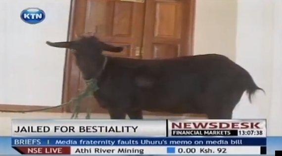 goat sex