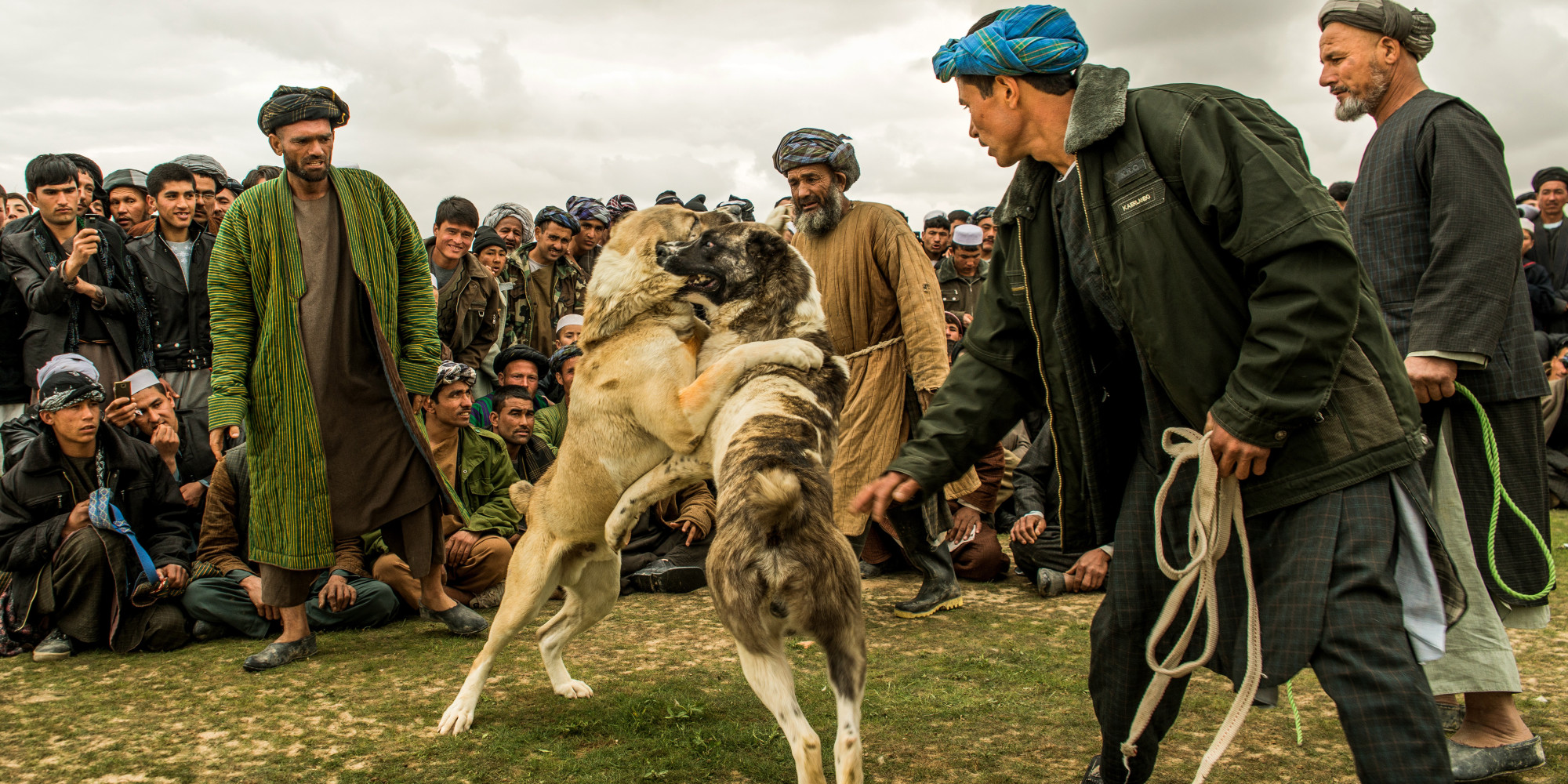 Dog Fighting In Afghanistan Illegal Blood Sport Continues