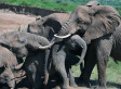 Nations Reach Illegal Ivory Trade Deal, Classify Wildlife Trafficking A 'Serious Crime'