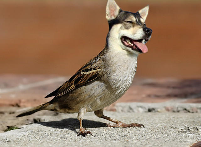 Birds With Dog Heads And Dogs With Bird Bodies Are Dirds ...