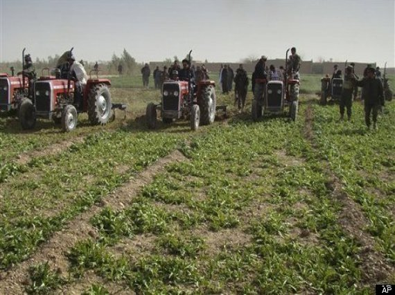 Us Troops Fight Afghan Opium Farming
