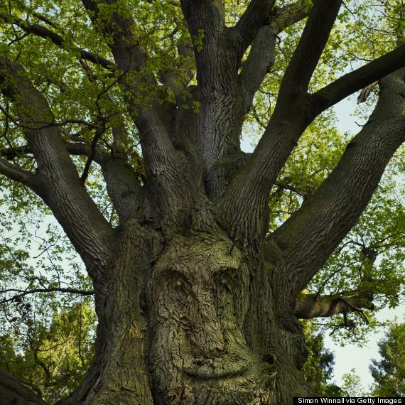 smile in tree