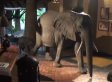 Elephants Walk Through Hotel Lobby Like They Own The Place (VIDEO)