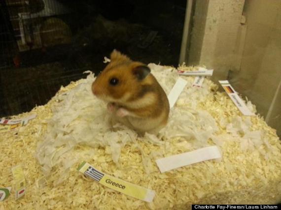 hamster minimerv