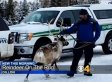 Reindeer That Escaped From Mall Santa Captured By Police, Christmas Back On Schedule