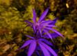 Uruguay Legalizes Marijuana Trade