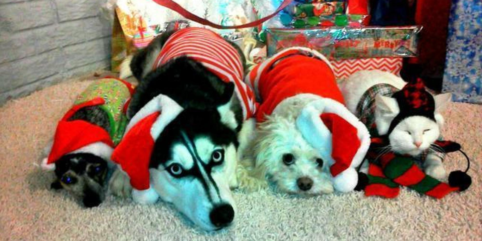 50 Pets In Christmas Costumes That Will Get You In The
