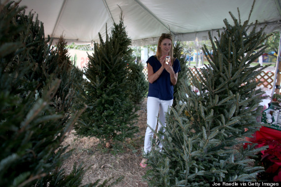 Shopping For Christmas Trees Is Different In Miami