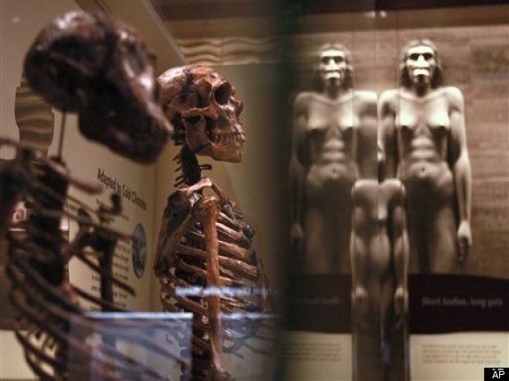 Smithsonian Human Evolution